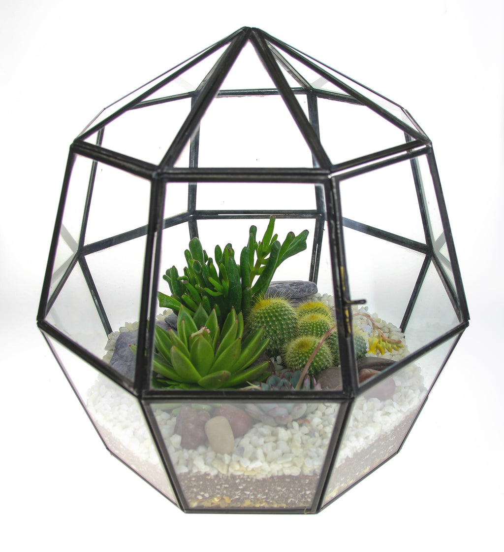 Enclosed terrarium with cacti