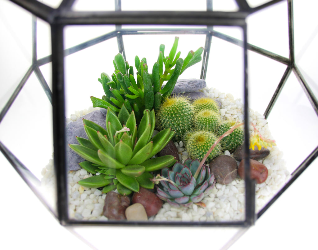 Nkuku terrarium with living plants