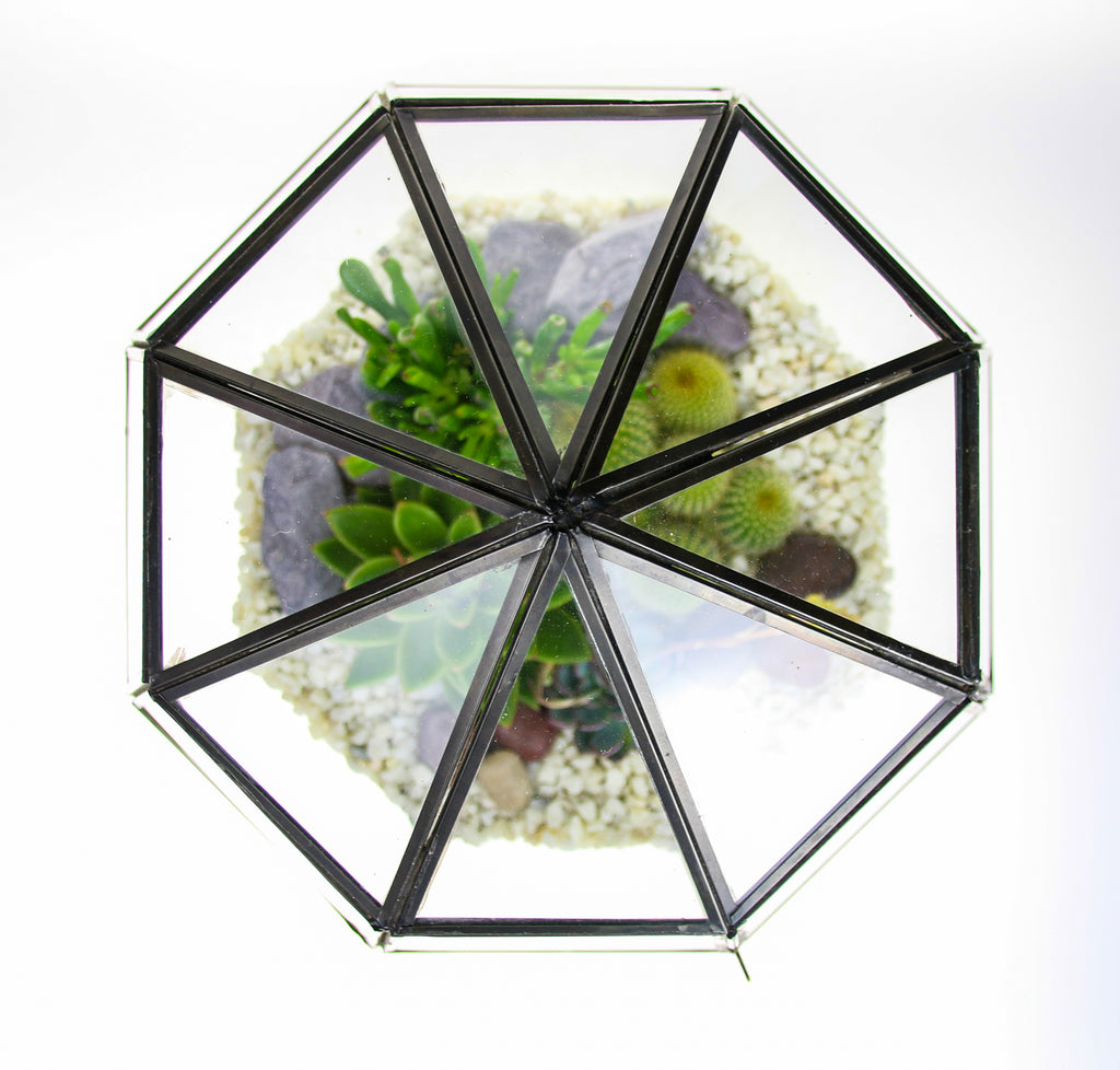 Glass terrarium with hinged door