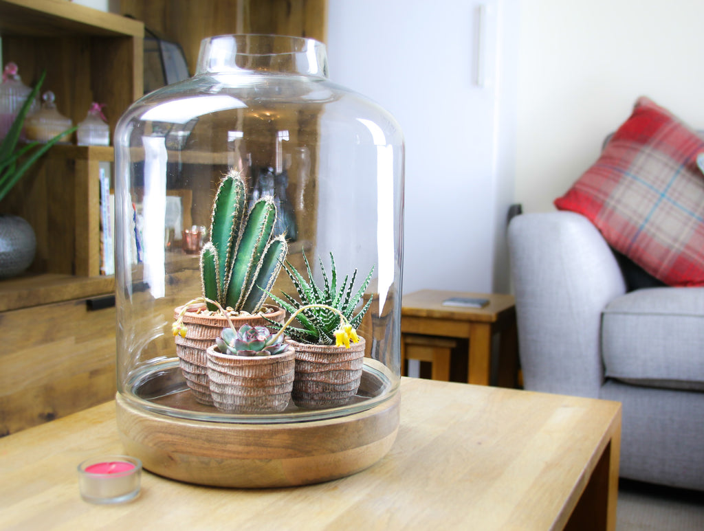 Elegant tall glass jar terrarium