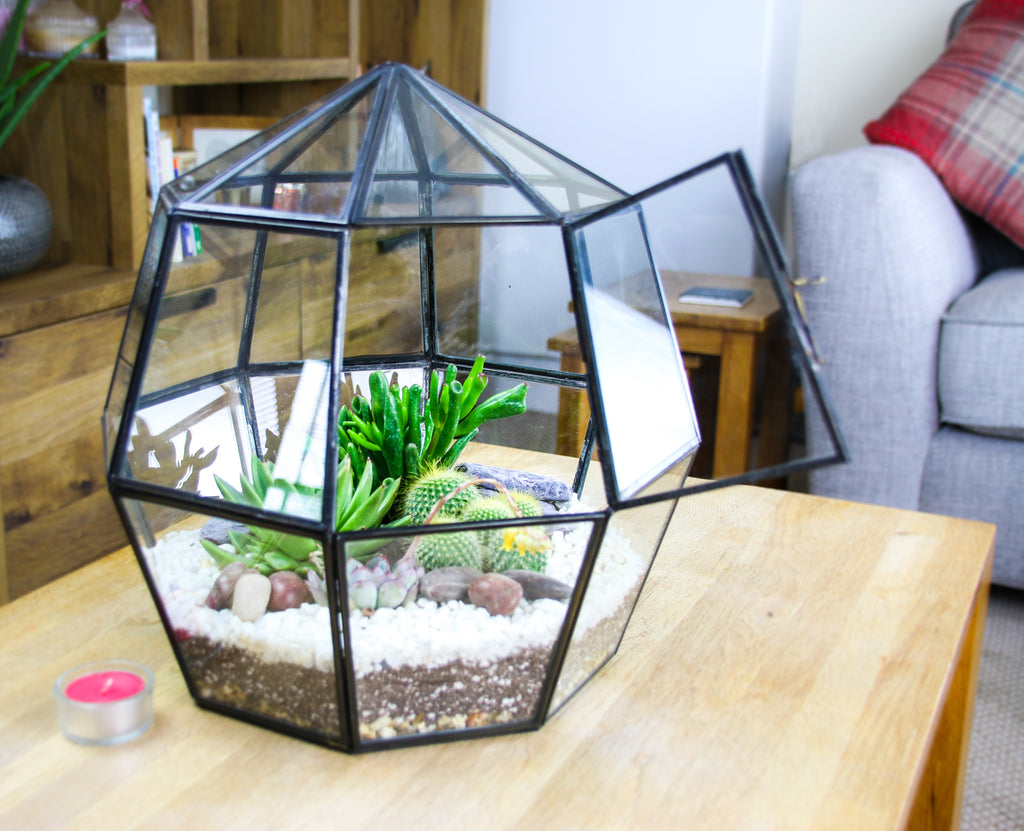Terrarium kit with real plants