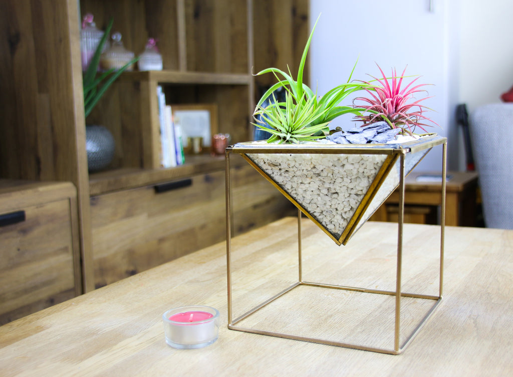 air plant brass geometric terrarium