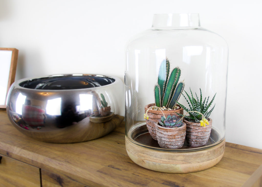 Terrarium with plants
