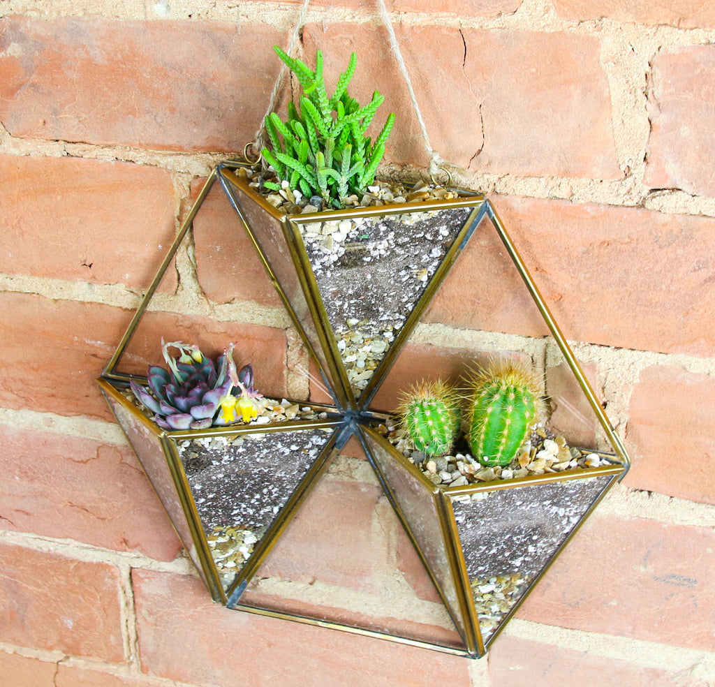 Wall hanging cactus display