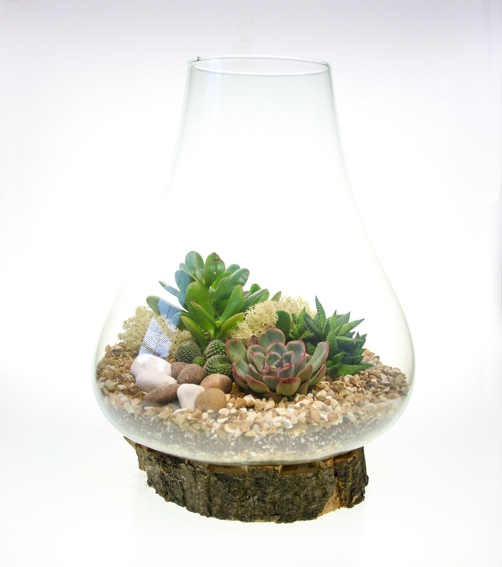 Terrarium on real wooden base