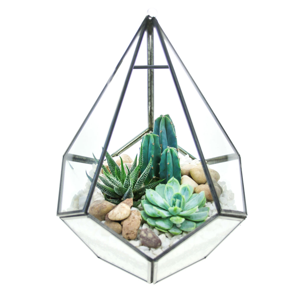 hanging geometric diamond terrarium