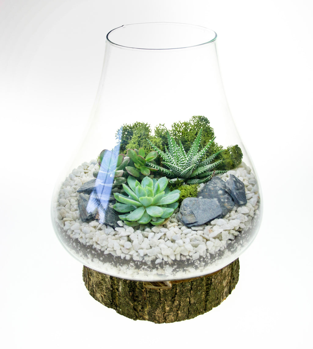 Medium sized terrarium on real wooden base