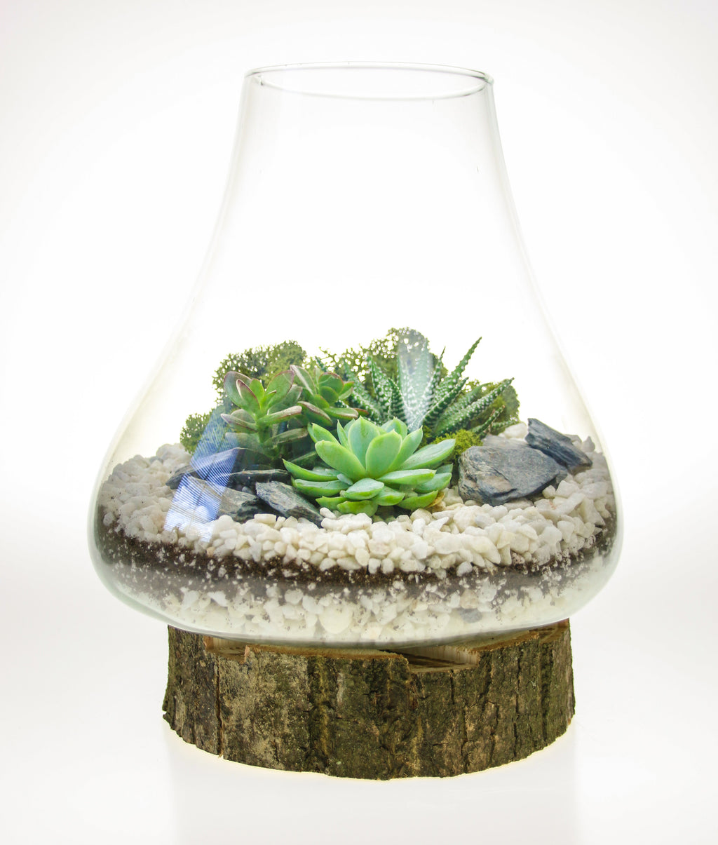 Terrarium arrangement ideas