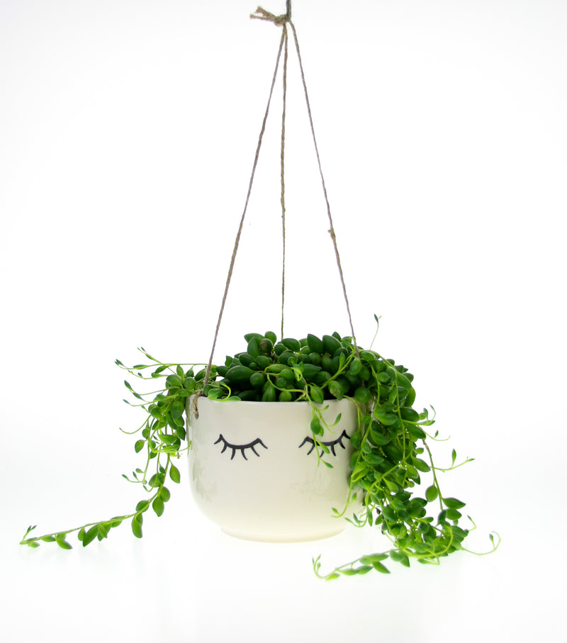 String of Pearls Plant with hanging planter