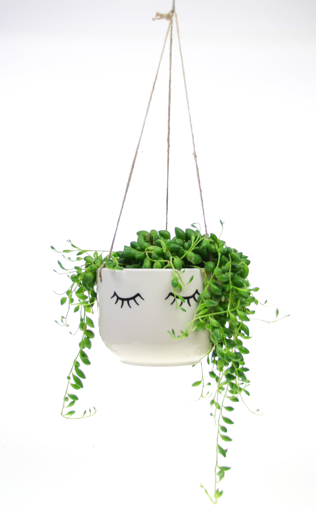 Indoor haning planter with living plant