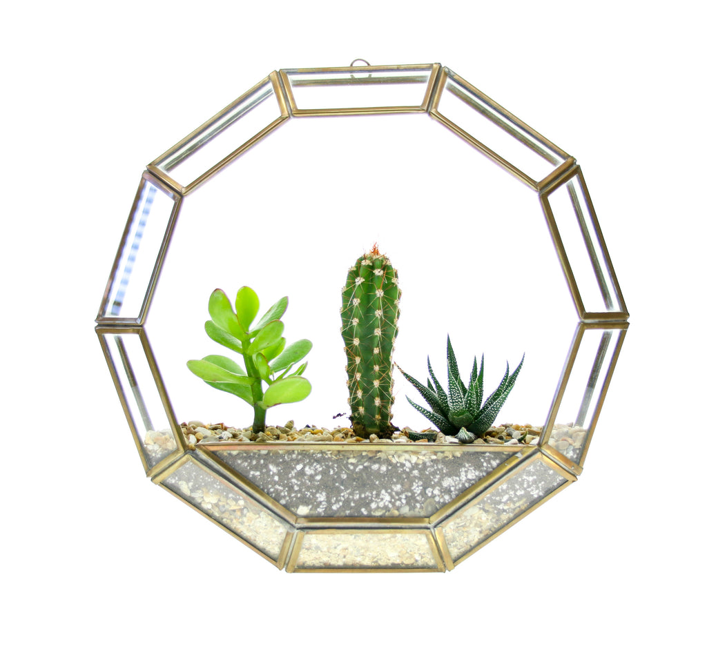 circular wall hanging planter with living plants