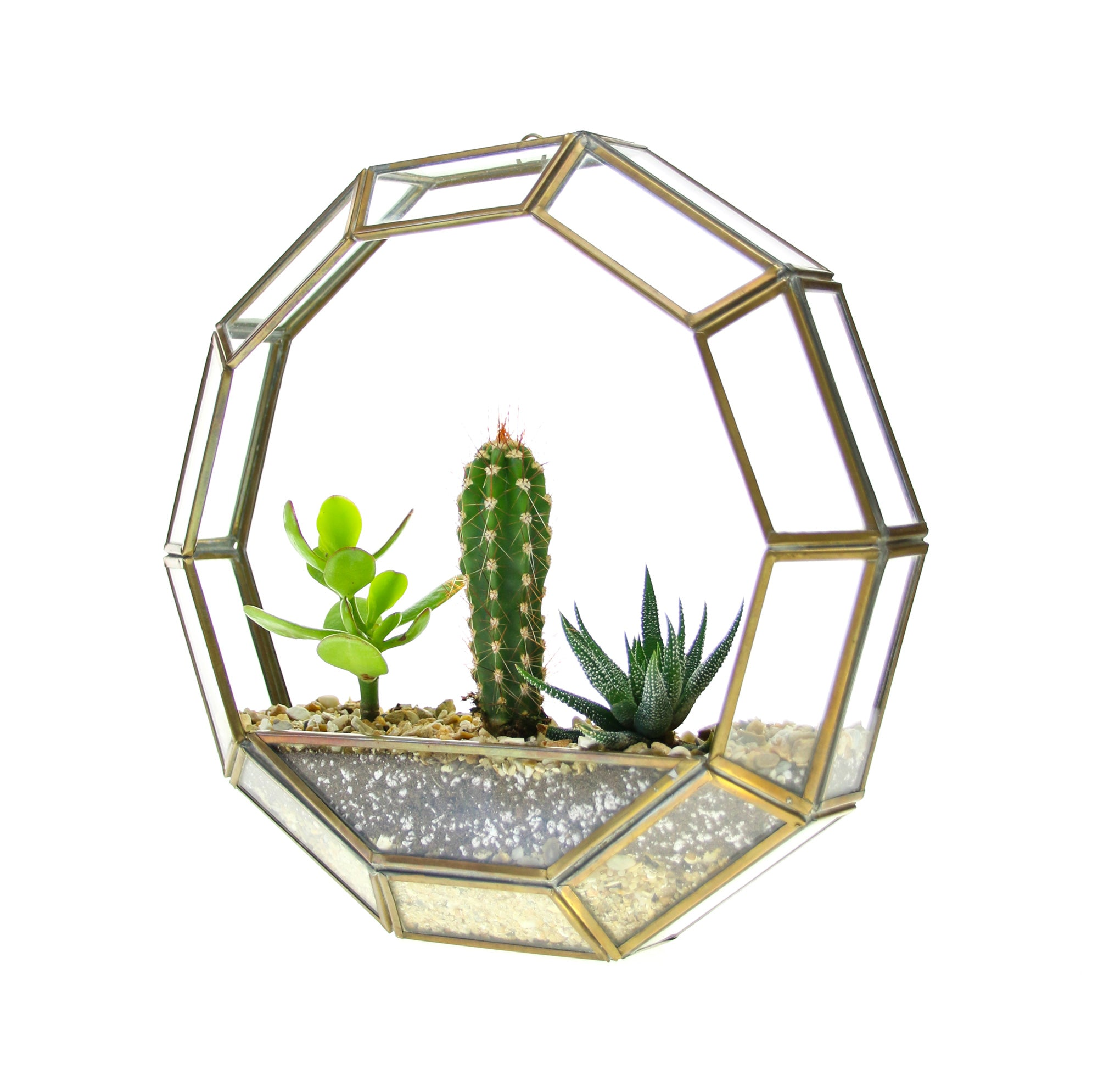 Circular Brass Wall Hanging Terrarium With Succulent And Cactus Trio The Art Of Succulents