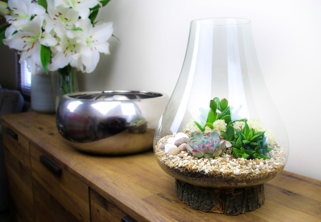 Large glass terrarium kit