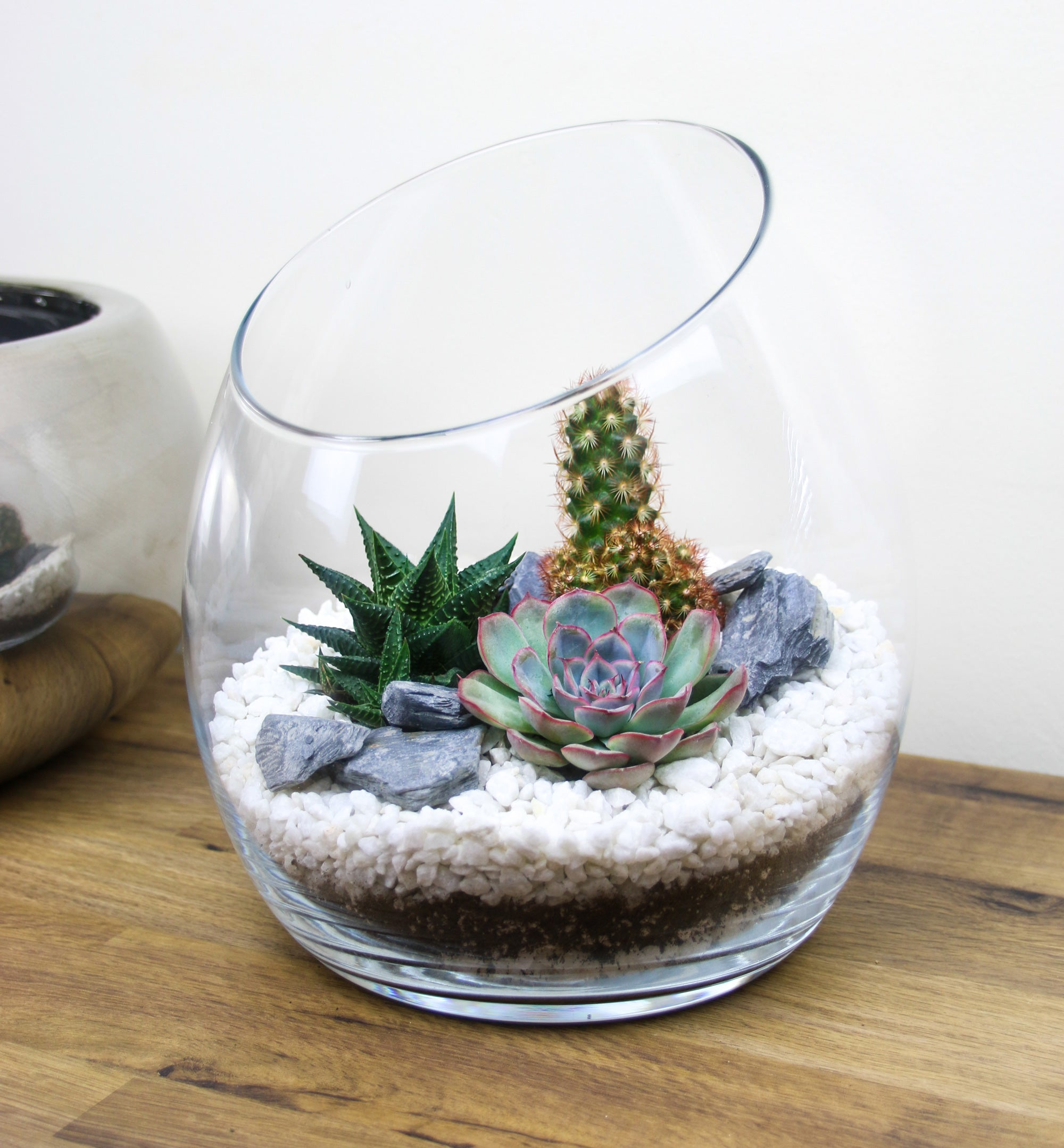 Large Angled Glass Terrarium With Living Succulents Cacti The Art Of Succulents