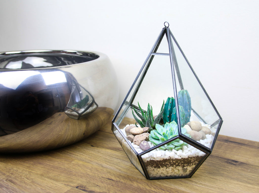 indoor plant gift ideas
