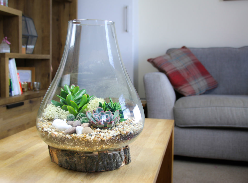Teardrop shaped terrarium