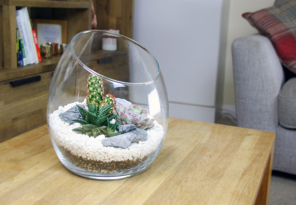 Terrarium kit with living plants to buy online