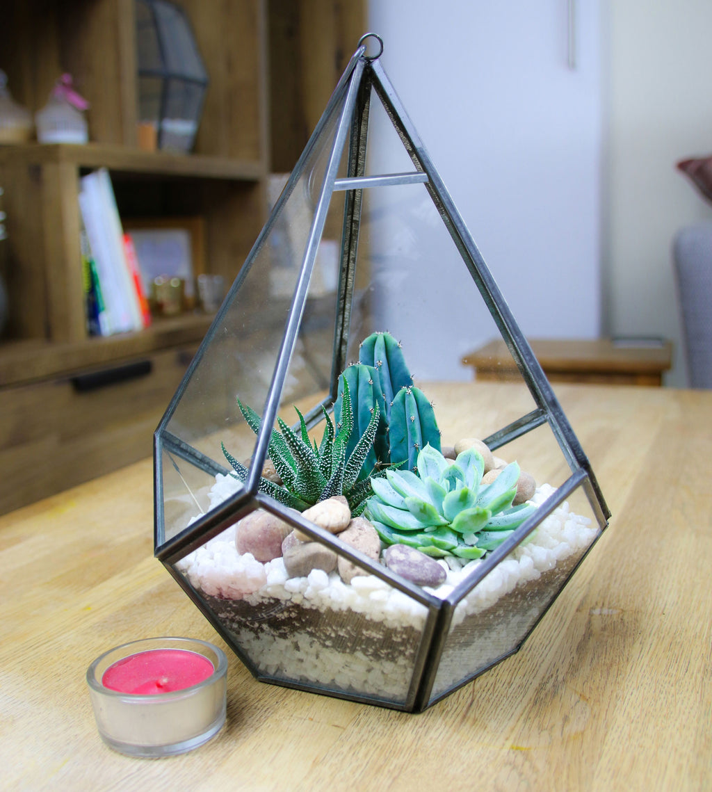 Cactus and succulent indoor terrarium kit