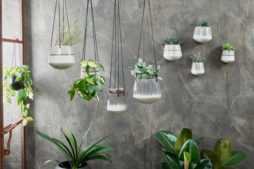 Indoor planters for succulents and cacti