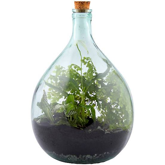 15 Litre Traditional Closed Plant Terrarium