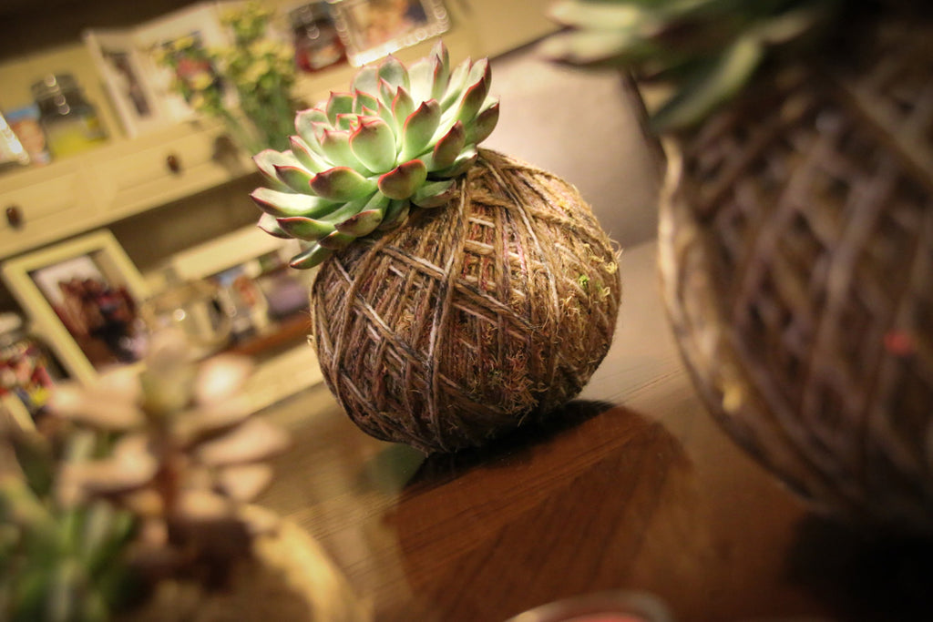 Kokedama home accessory gigt