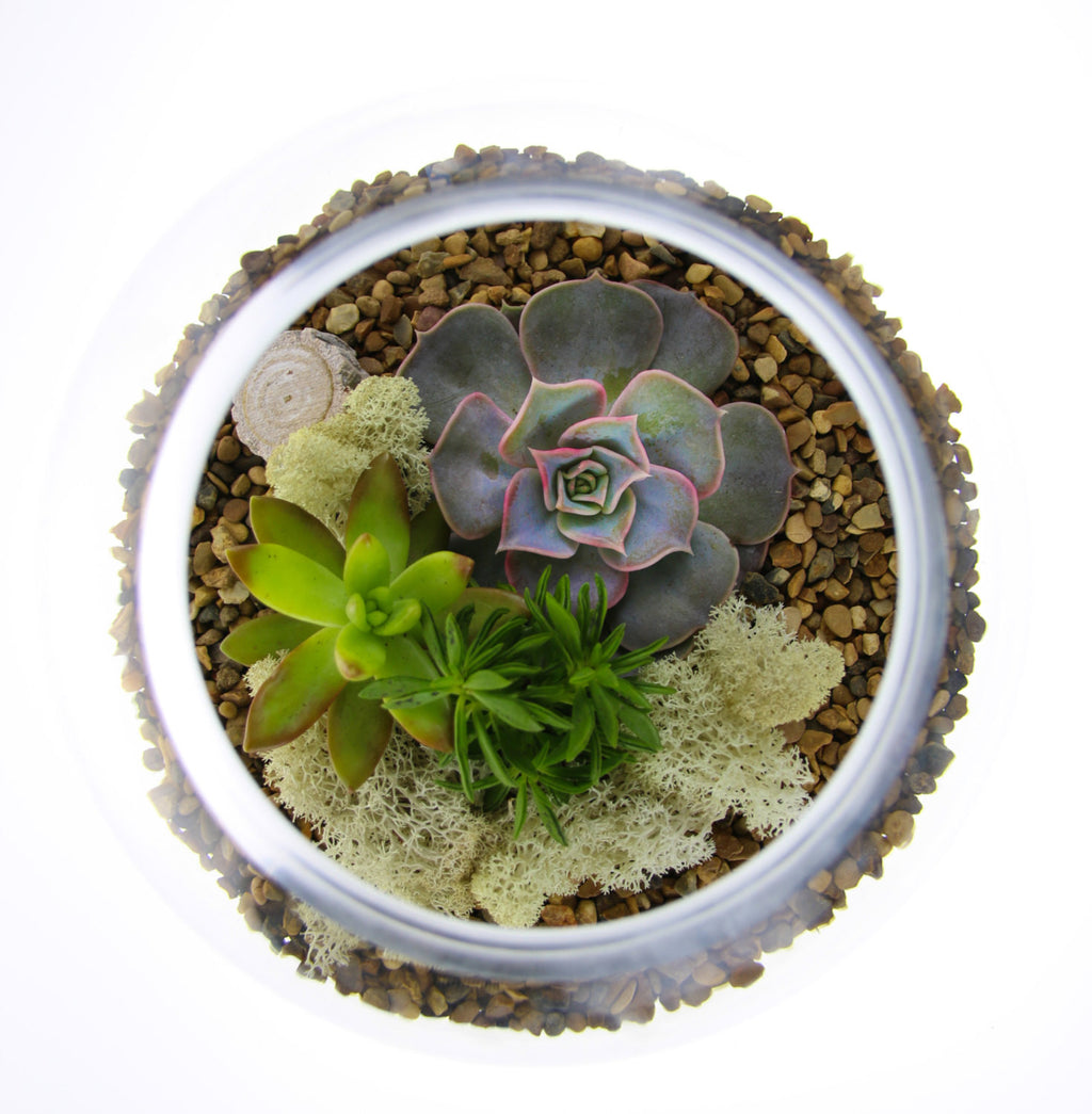 Planted Succulent Terrarium with natural gravel