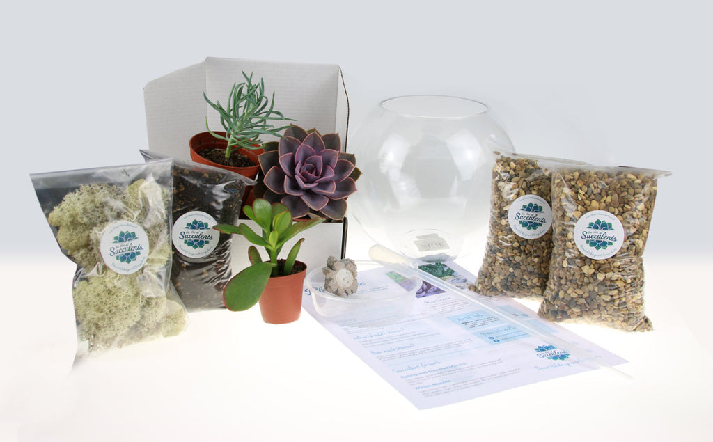 Terrarium Kit, UK Supplier
