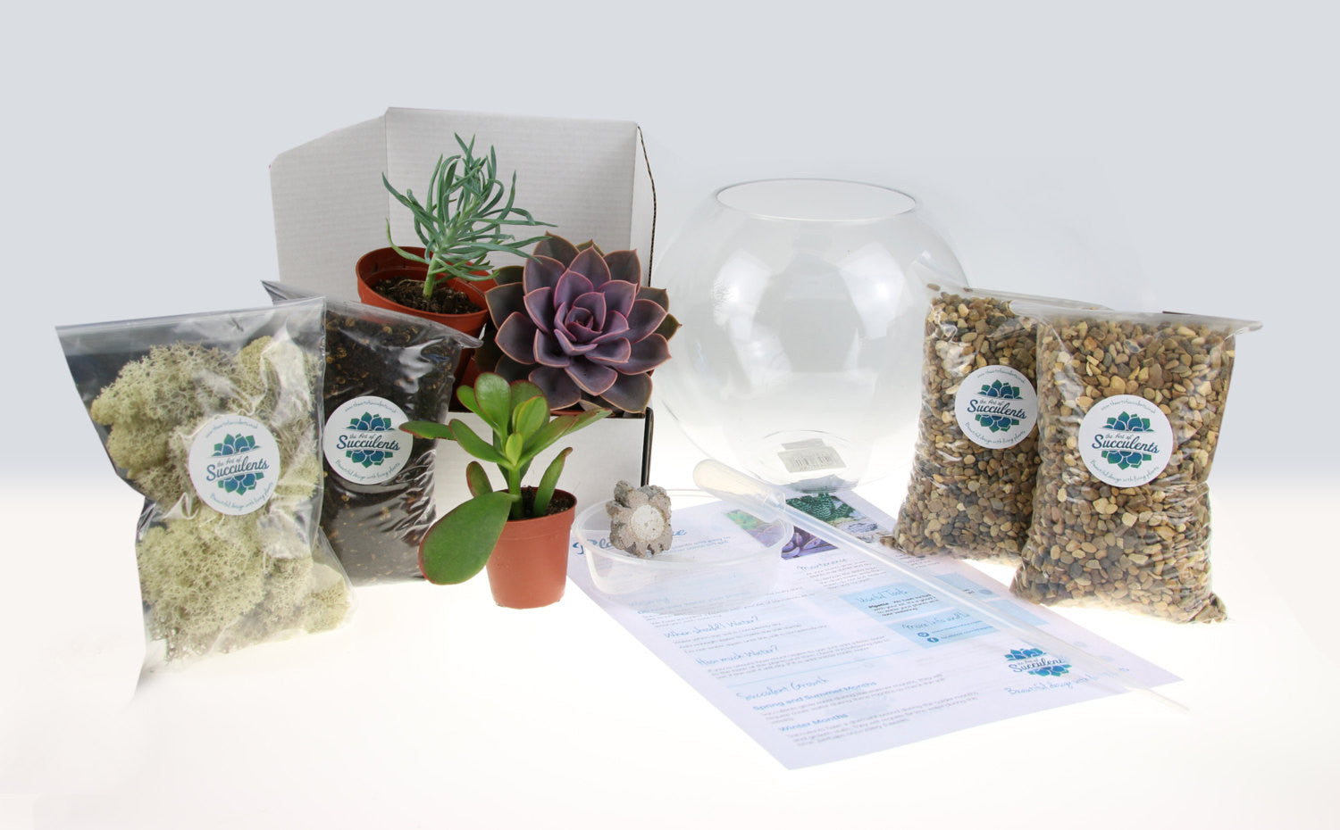 Gorgeous Glass Globe Succulent Terrarium To Buy In The Uk The Art
