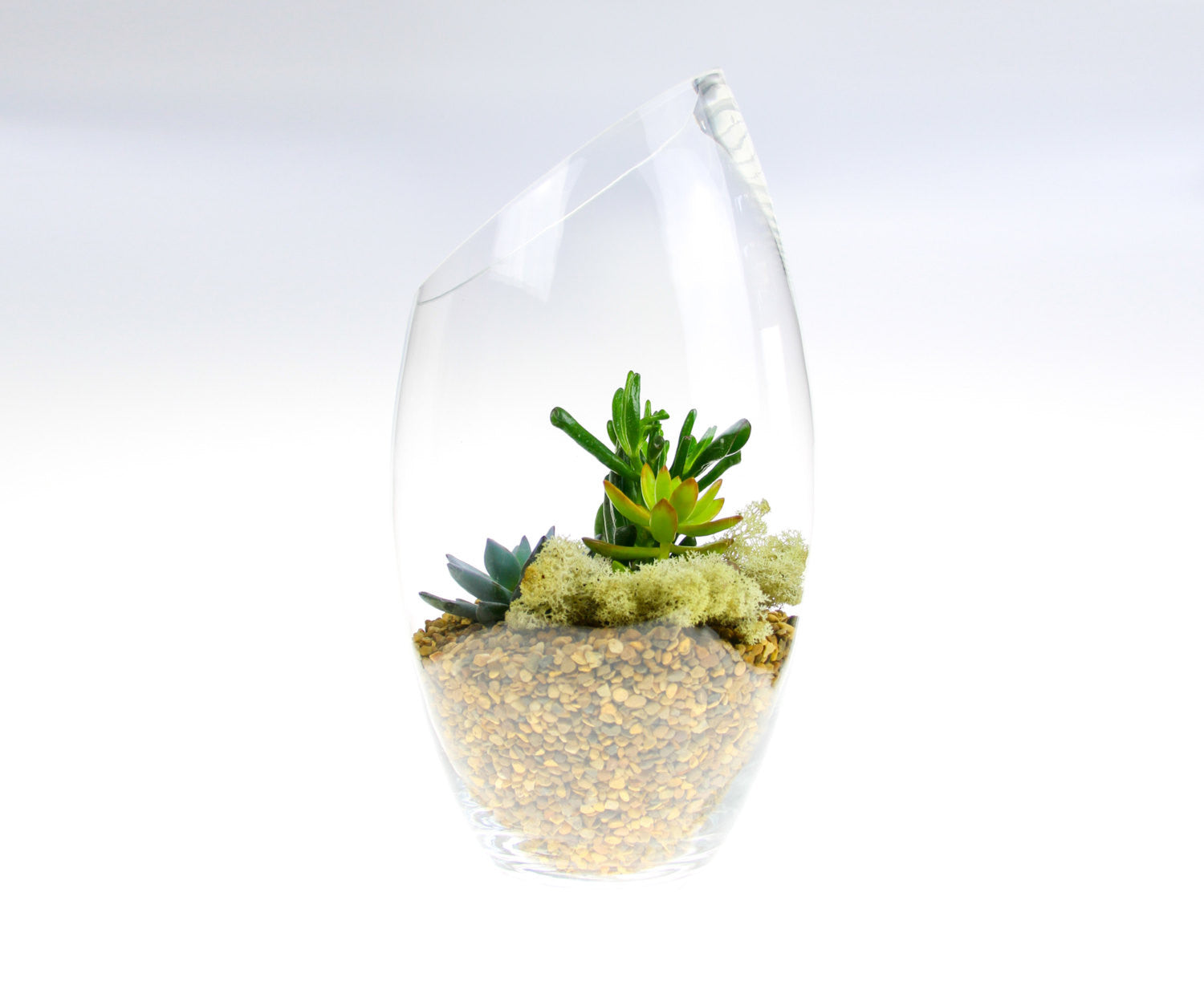 Tall Contemporary Glass Terrarium Kit With Living Succulent Plants