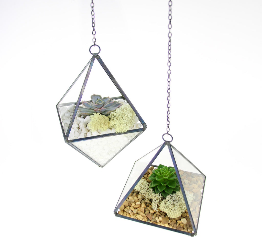 Duo of Copper Geometric Terrariums with Real Succulents