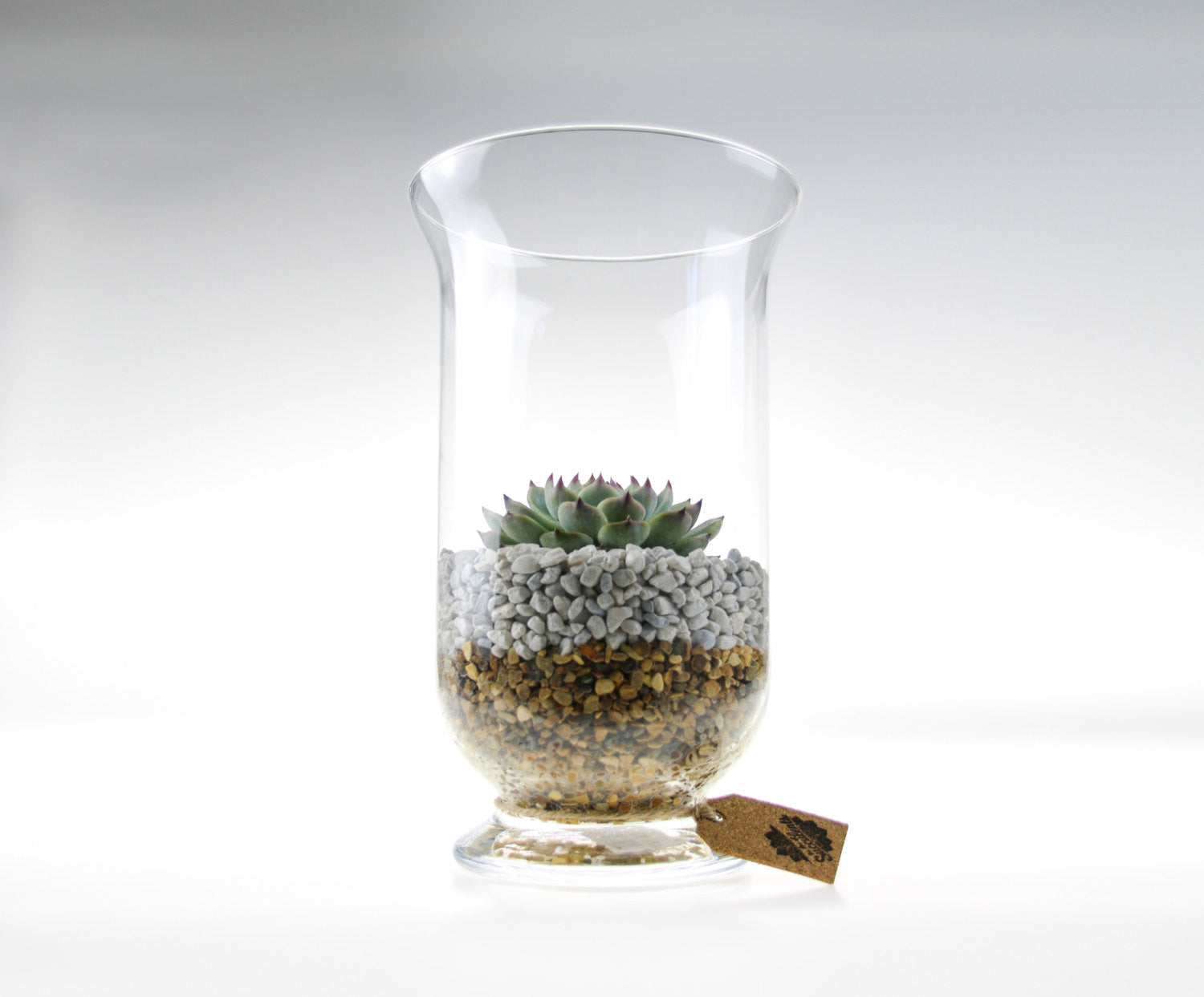 Tall Glass Terrarium Kit With Large Echeveria Succulent The Art Of