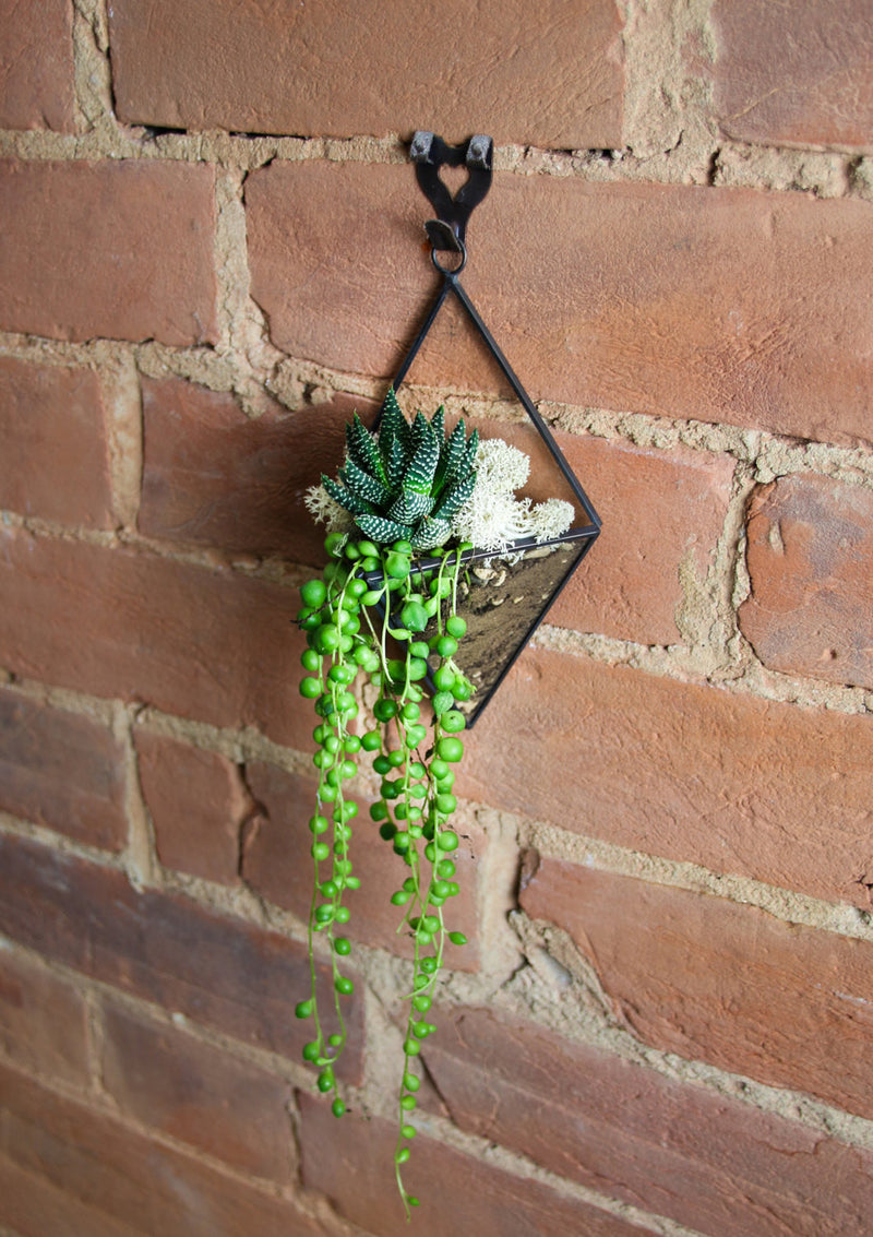 String of Pearls Geometric Terrarium