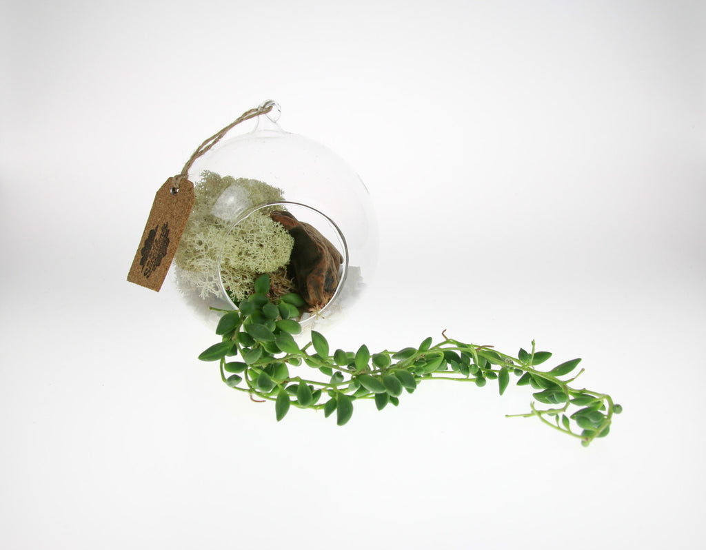 Beautiful Glass Terrarium ideas