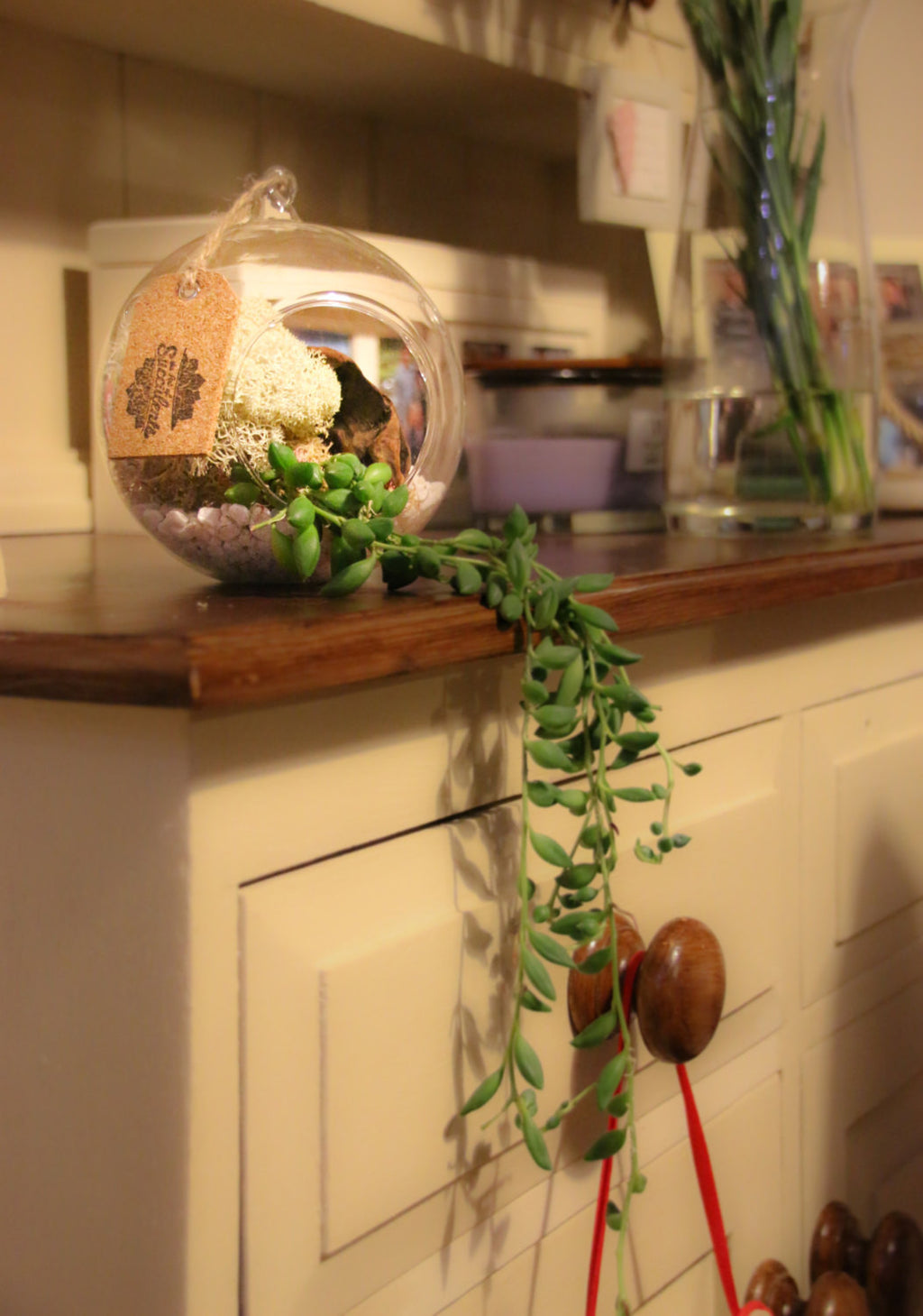 Home Accessory Terrarium to buy in the UK