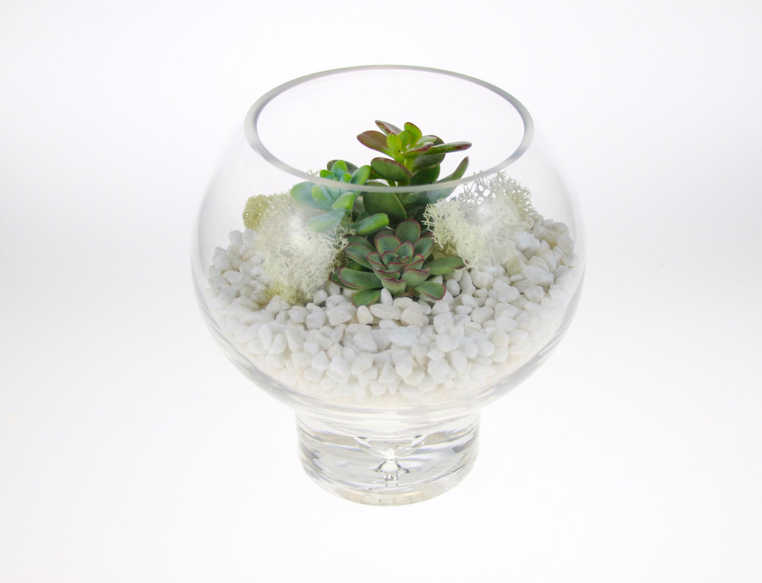 Miniature Glass Sphere Diy Terrarium Kit With Living Succulents