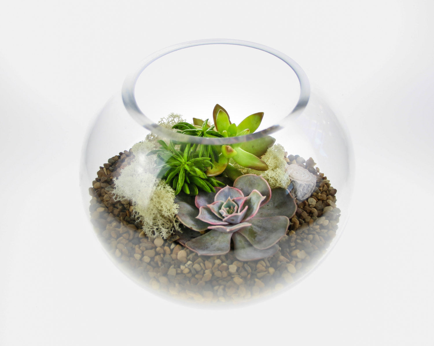 Gorgeous Glass Globe Succulent Terrarium With 3 Beautiful Plants Medium