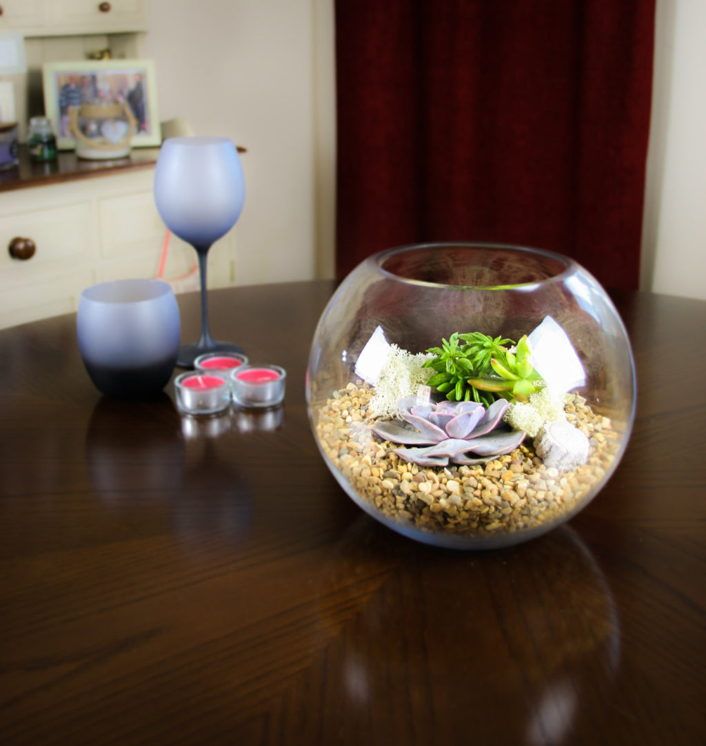 Glass Globe Terrarium Kit with Succulents