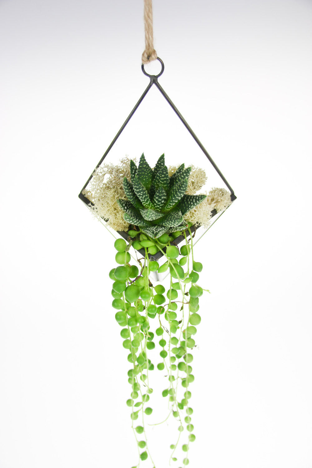 UK Succulent Copper and glass Terrarium Kit