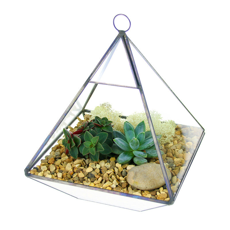 Geometric Pyramid Terrarium Kit with living succulents
