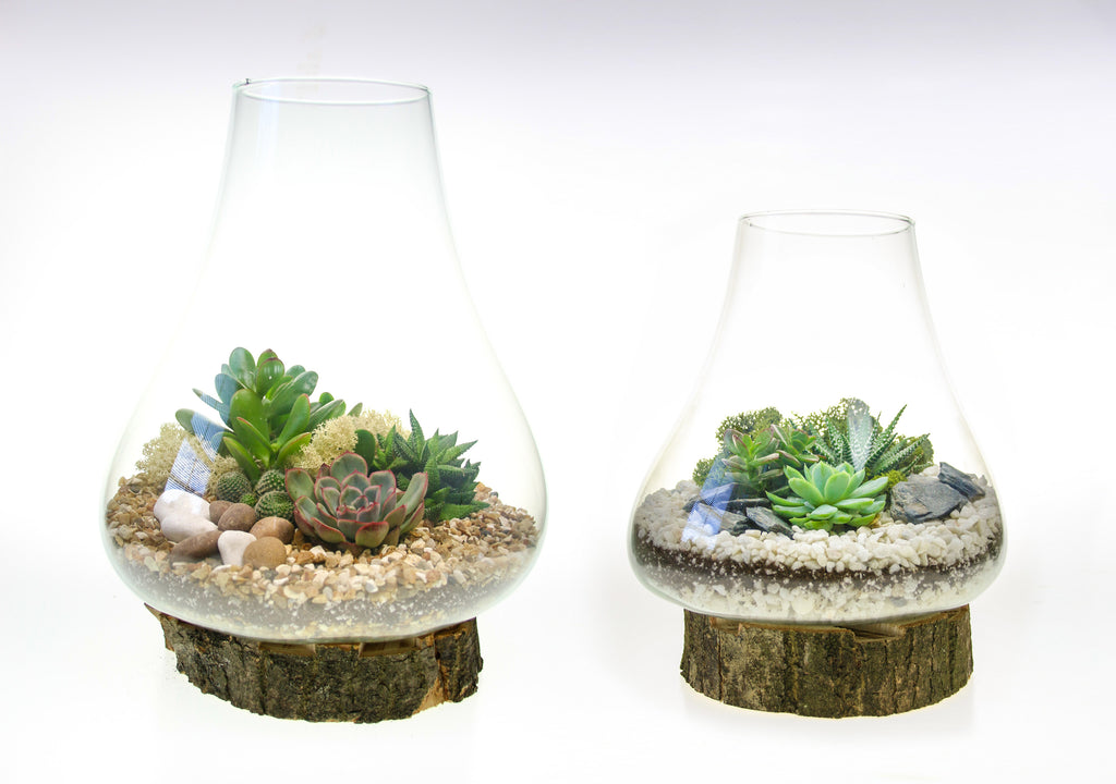 Terrarium set of two, home accessories with plants