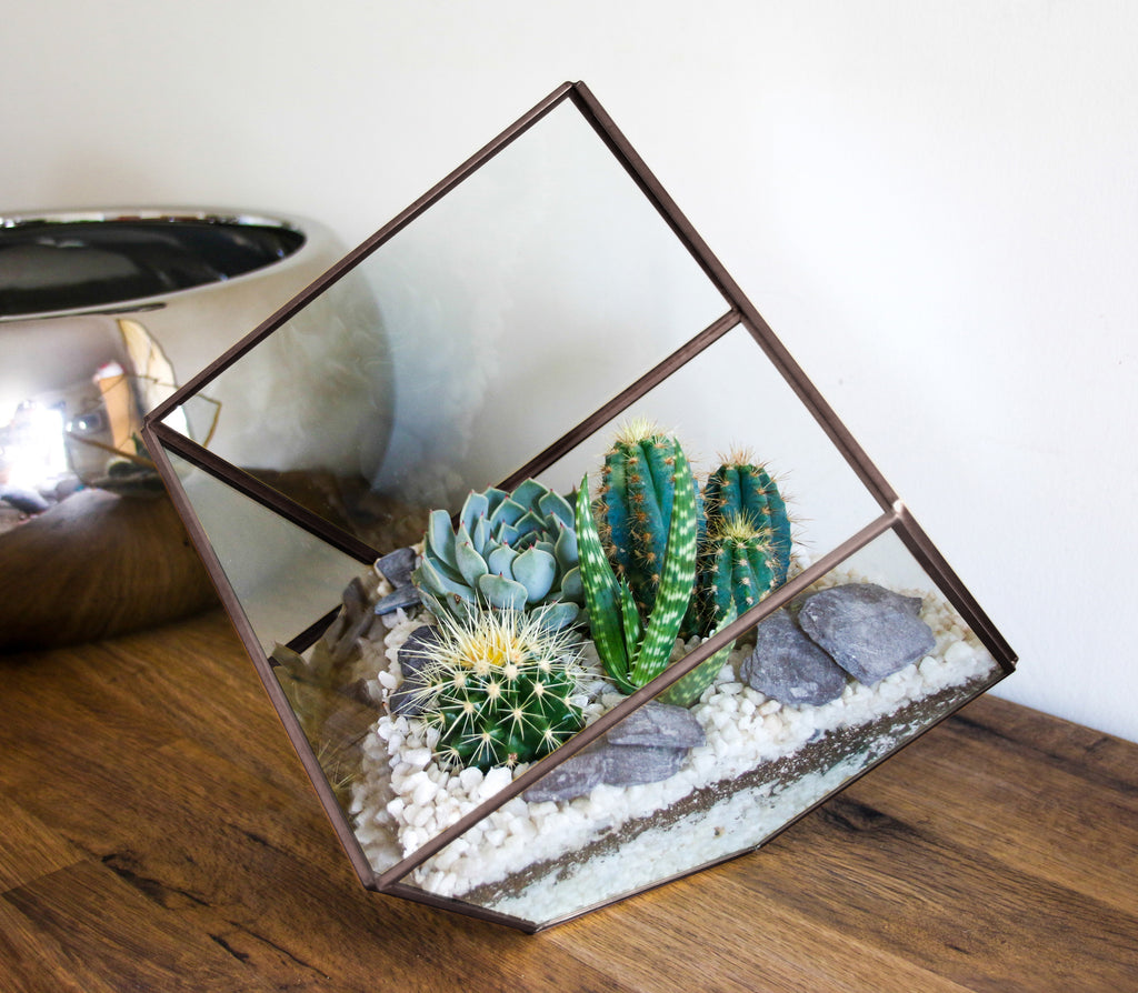Indoor terrarium with cactus and succulent plants
