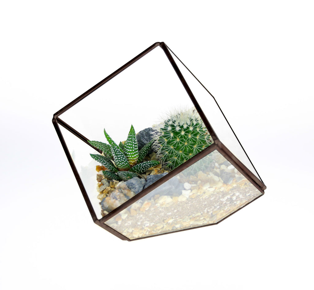 Cactus and Succulant square terrarium small