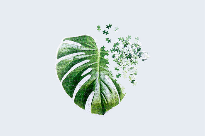 Slow Puzzle Monstera