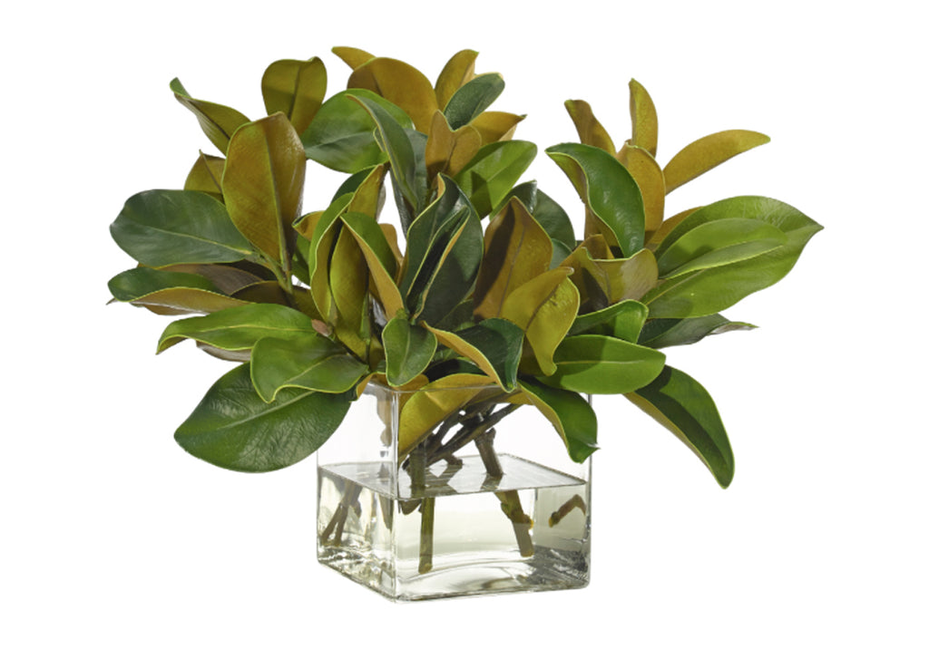 MAGNOLIA FOLIAGE IN GLASS CUBE