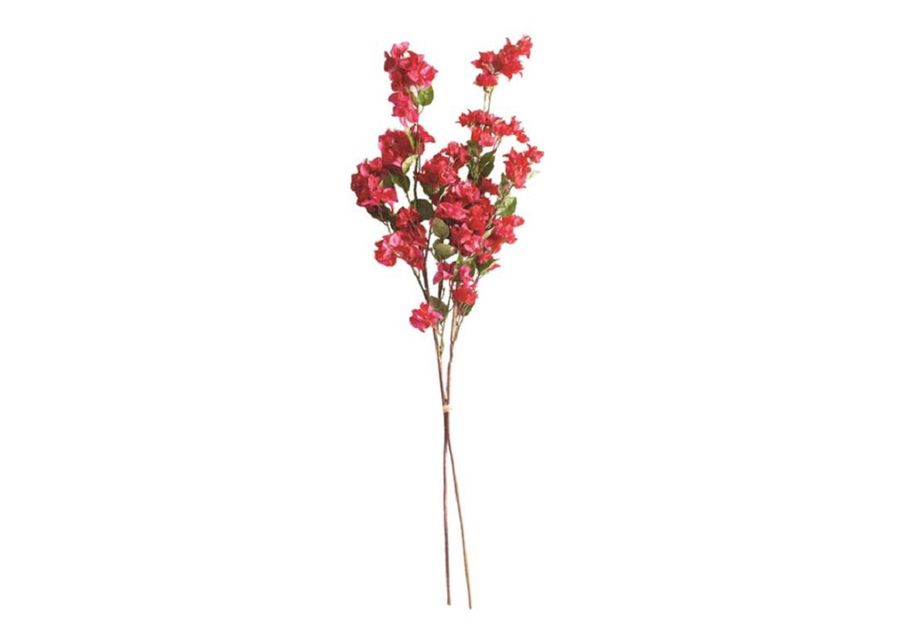 BOUGAINVILLEA STEMS