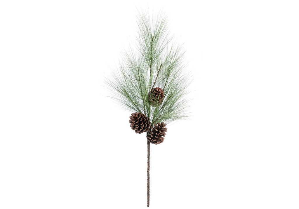 LONG NEEDLE PINE BRANCH