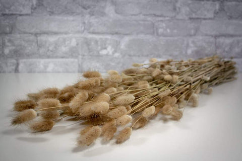 Sola Wood Flowers bunny tails