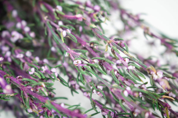 Sola Wood Flowers Filler Preserved Heather