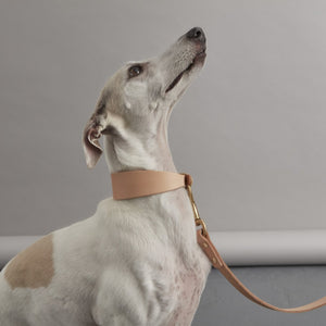 Fetch and Follow Natural Leather Hound Collar