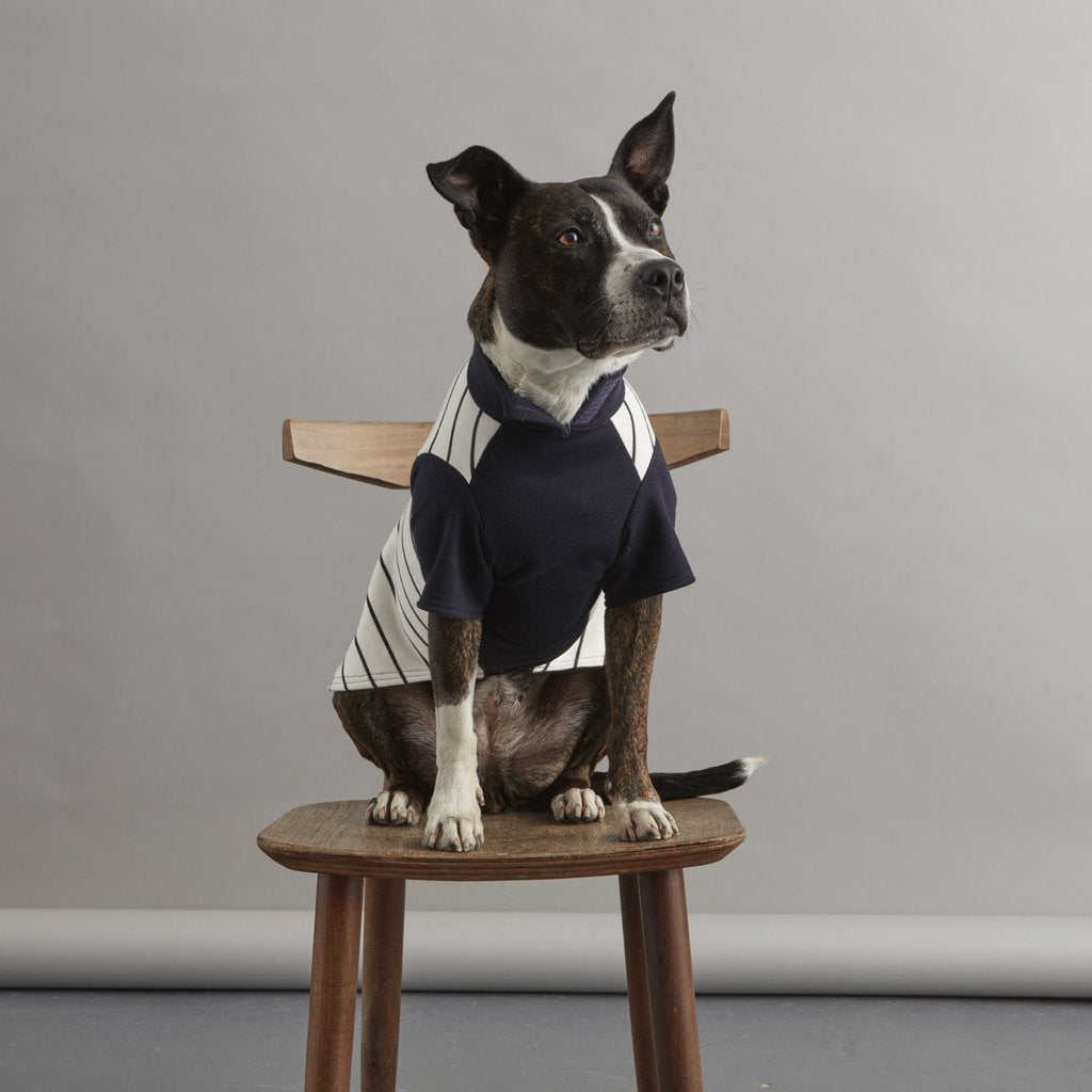Fetch and Follow Navy and Cream Striped Dog Sweater